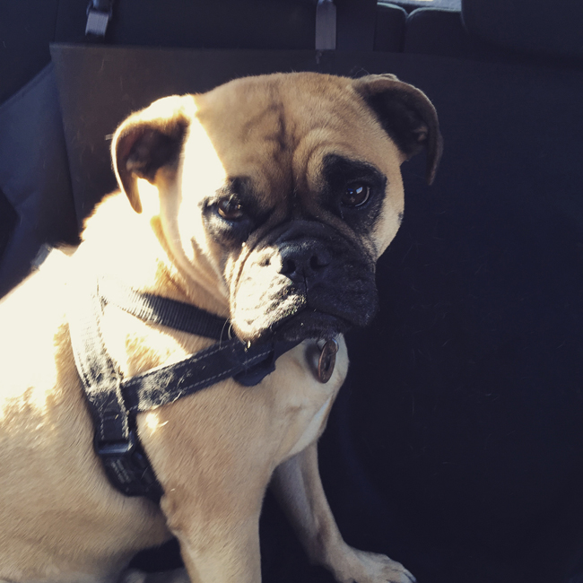 Emmett in the car